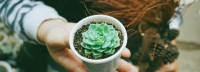 It's A Plant Swap
